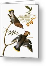 Audubon: Waxwing Greeting Card