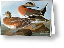 Audubon: Wigeon, 1827-38 Greeting Card