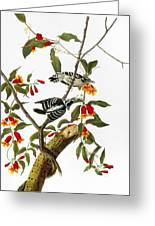 Audubon: Woodpecker, 1827 Greeting Card