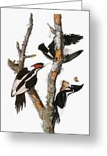 Audubon: Woodpecker Greeting Card
