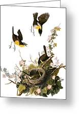 Audubon: Yellow Chat, (1827-38) Greeting Card