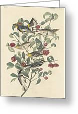 Audubon's Warbler Greeting Card