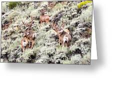 August Bucks Greeting Card