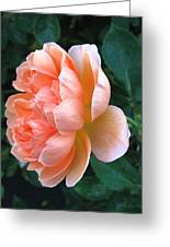 August Rose 09 Greeting Card