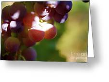 Auntie Thelma's Grapes - Ripening Greeting Card