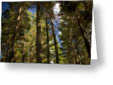 Aupouri Forest Greeting Card