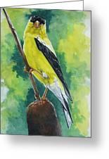 Aureate Greeting Card