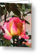 Aurora Color Rose Bud. Wow Greeting Card