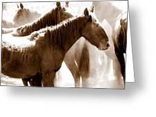 Wild Horses - Australian Brumbies 3 Greeting Card