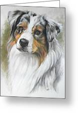 Aussie Shepherd Portrait Greeting Card