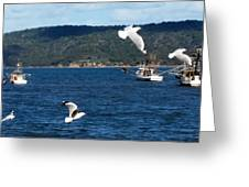 Australia - Seagulls And Trawlers Greeting Card