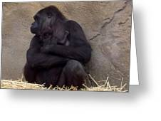 Australia - Baby Gorilla In Mums Arms Greeting Card