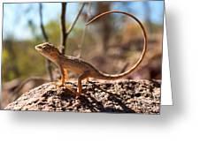 Australian Dragon Greeting Card