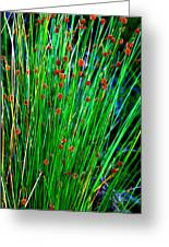 Australian Native Grass Greeting Card