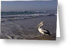 Australian Pelican And Surf Greeting Card