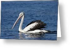 Australian Pelican B Greeting Card
