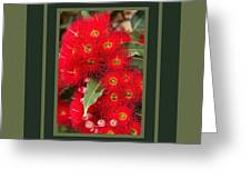 Australian Red Eucalyptus Flowers With Design Greeting Card