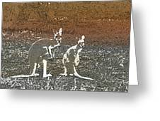 Australian Red Kangaroos Greeting Card