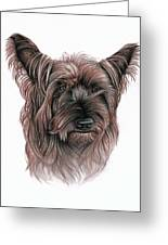 Australian Terrier Greeting Card