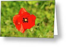 Austrian Poppy Greeting Card