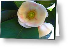 Autograph Tree Blossom Greeting Card by James Temple