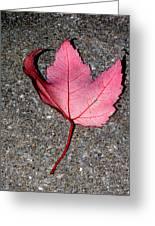 Autum Maple Leaf 2 Greeting Card