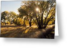 Autum Sunburst Greeting Card