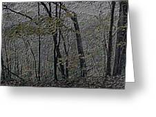 Autumn 2015 Panorama In The Woods Pa 01 Greeting Card