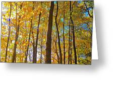 Autumn Afternoon Light Greeting Card