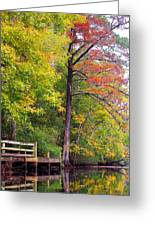 Autumn Along Brices Creek Greeting Card