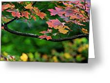 Autumn Along The Branch Greeting Card