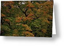 Autumn Arrives Greeting Card