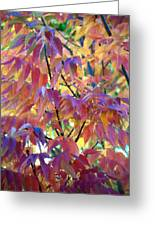 Autumn Ash Tree 1 Greeting Card