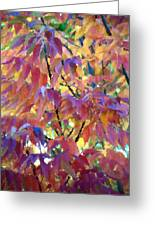 Autumn Ash Tree 3 Greeting Card