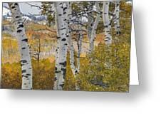 Autumn Aspens 8 Greeting Card