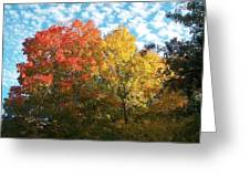 Autumn At Beaver Dam Greeting Card