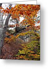 Autumn At Beech Forest Greeting Card