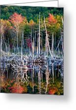 Autumn At Moosehead Bog Greeting Card