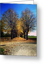 Autumn Avenue Greeting Card by Niki Mastromonaco