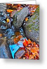 Autumn B 2015 117 Greeting Card