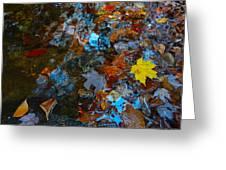 Autumn B 2015 121 Greeting Card