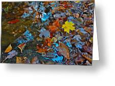 Autumn B 2015 123 Greeting Card