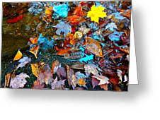 Autumn B 2015 124 Greeting Card