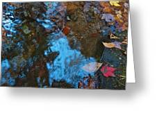 Autumn B 2015 130 Greeting Card