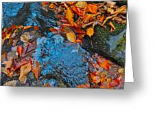Autumn B 2015 185 Greeting Card