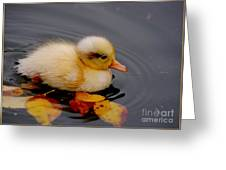 Autumn Baby Greeting Card by Jacky Gerritsen
