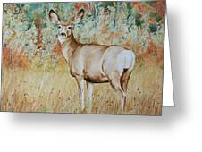 Autumn Beauty- Mule Deer Doe  Greeting Card
