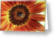 Autumn Beauty Sunflower Greeting Card