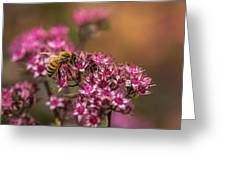 Autumn Bee On Flowers Greeting Card