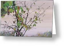 Autumn Birch By Sand Creek Greeting Card by Carolyn Doe